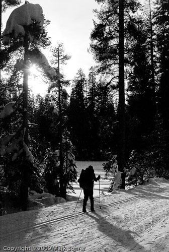 XC Skiing near the Glacier Point Road, Yosemite