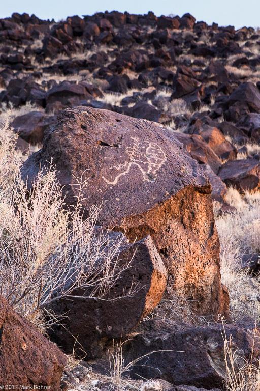 Paramecium in warm morning light, Mesa Prieta, Petroglyph National Monument