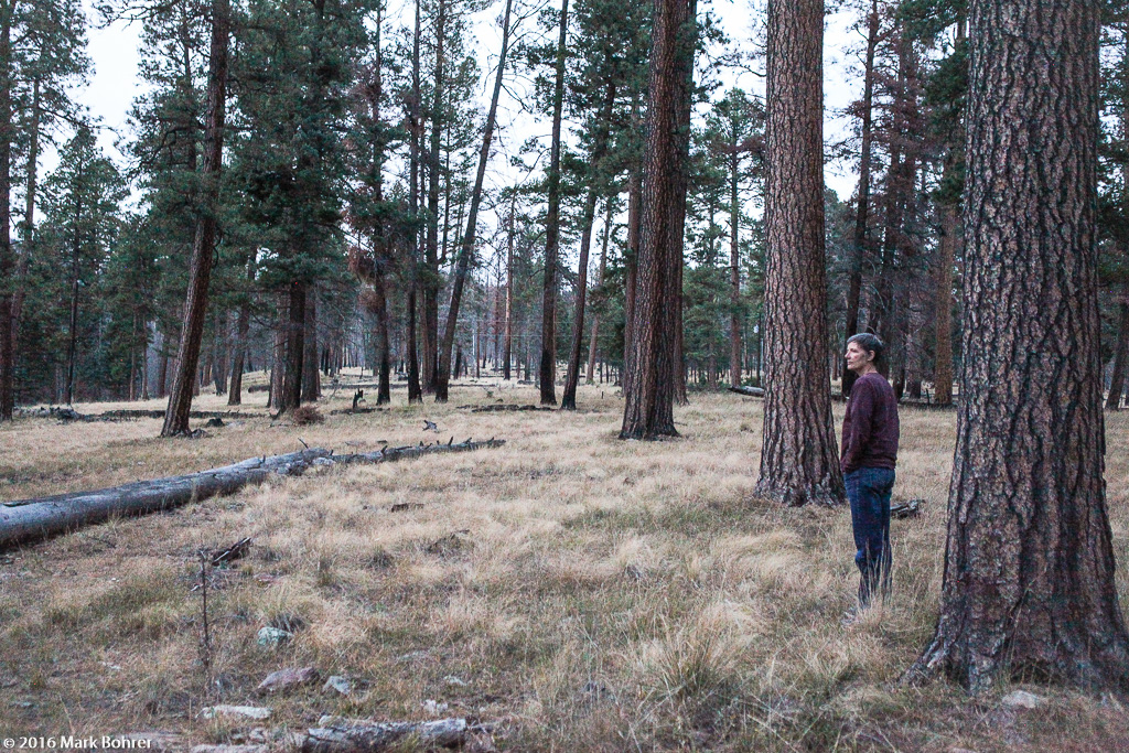 Listening to bugling elk in History Grove, Valles Caldera National Preserve