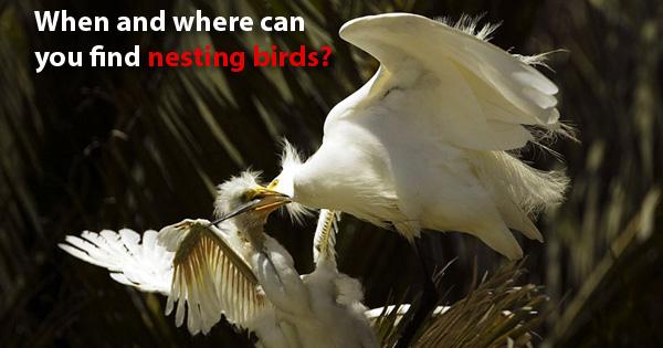 DBW-SE1214-5_nesting_time_315h