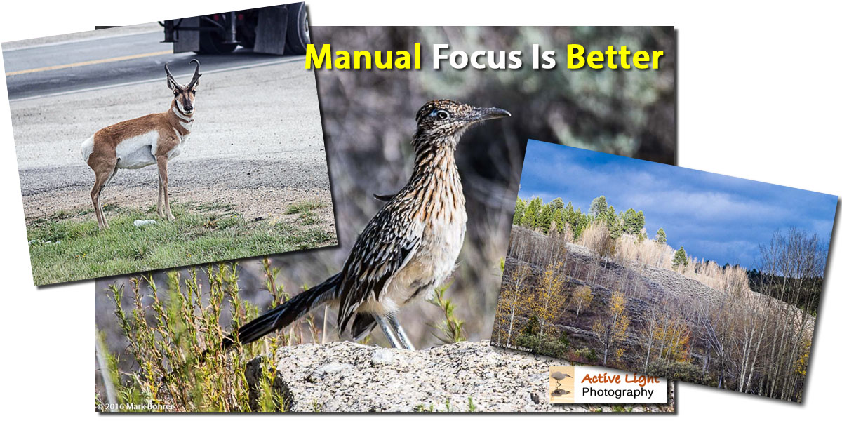 Manual focus is better... - Active LIght Photography