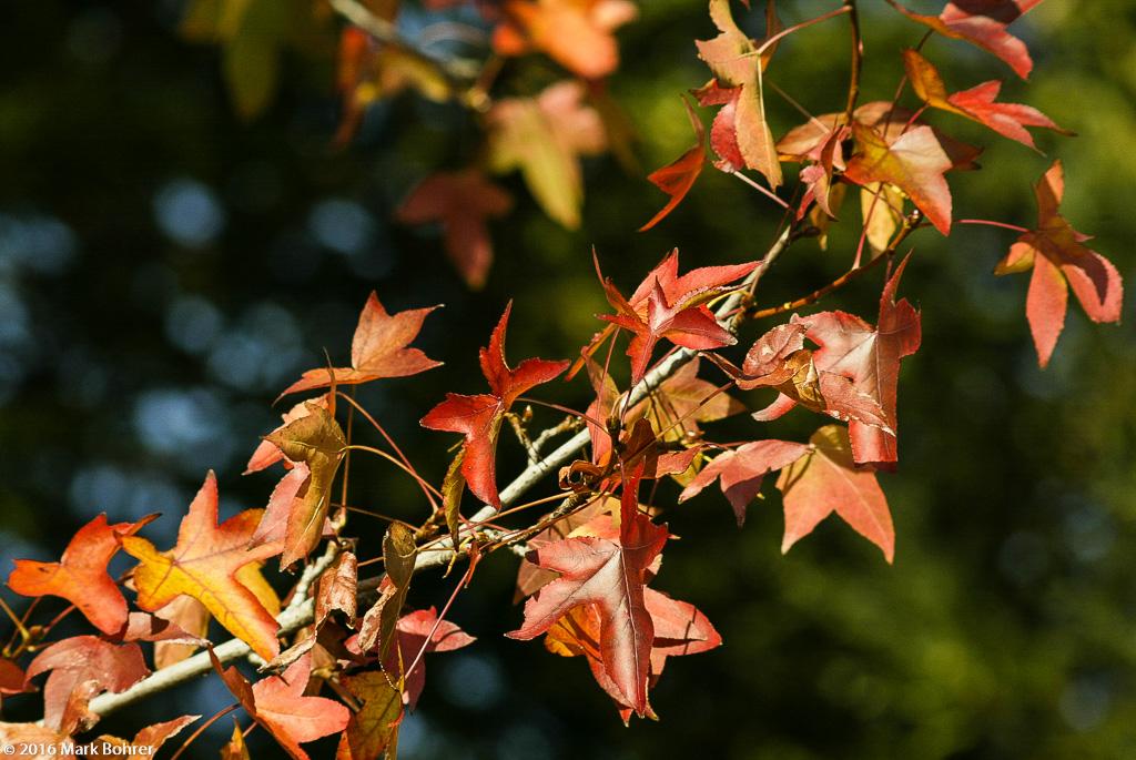 Autumn colors, Saratoga Post Office, California