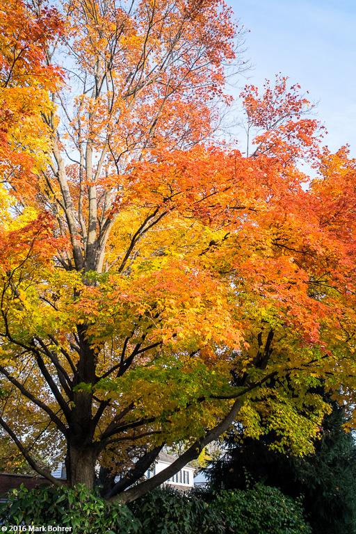 Fall color, Kenilworth, Illinois