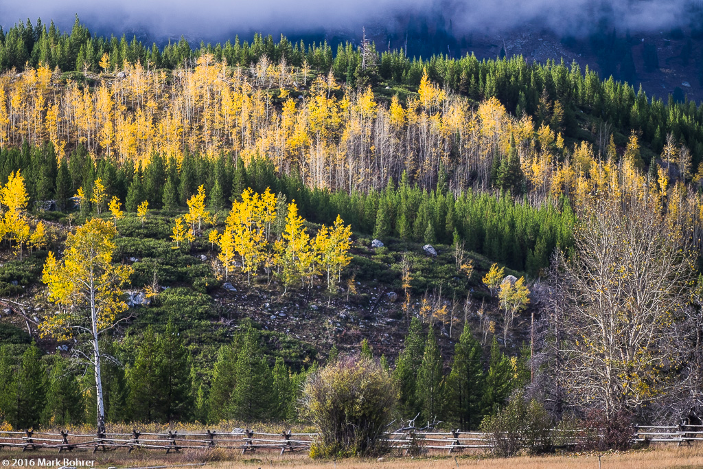 Wood rail fence and aspen rows, Jackson Hole, Wyoming