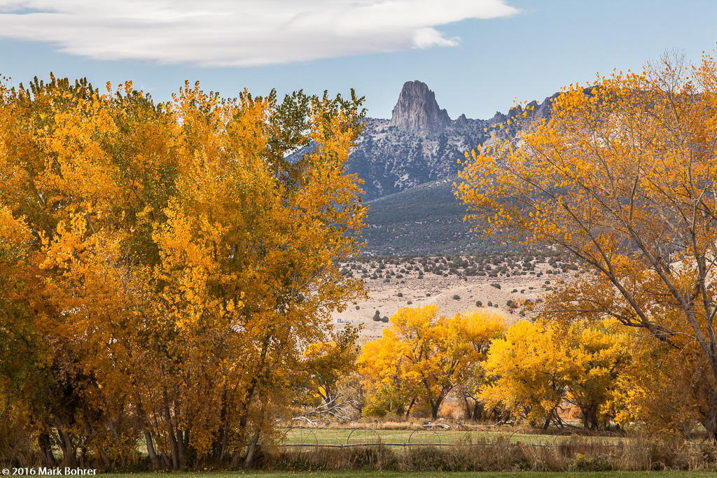 Fall color south of Cortez, Colorado