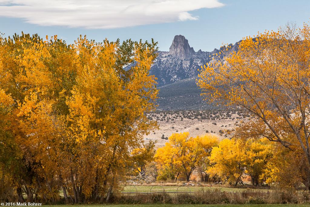 Fall color south of Cortez, Colorado