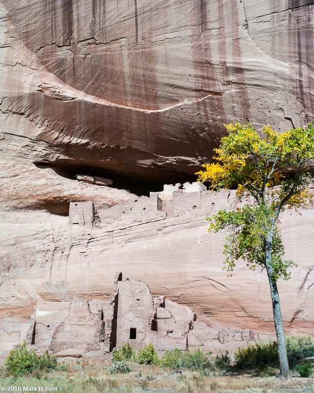 Lonely tree, White House Ruin, Canyon de Chelly, Arizona