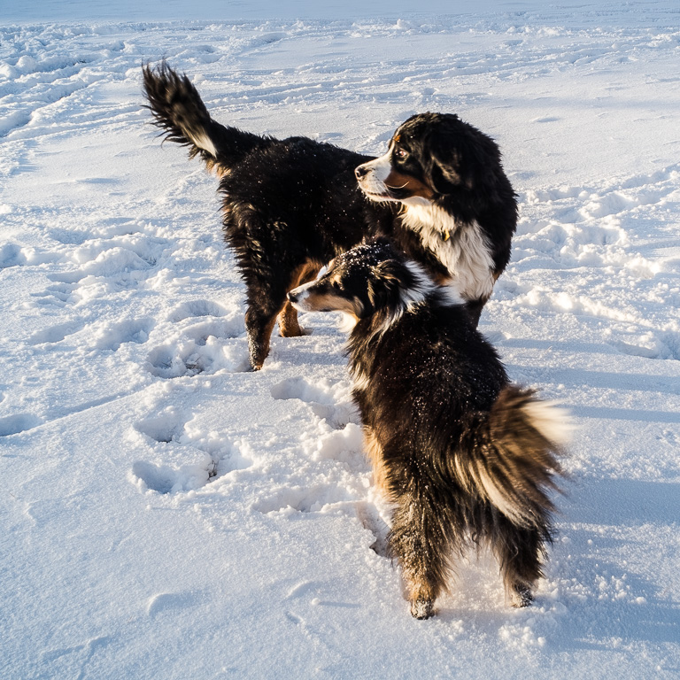 Buzz and Daisy pause their playtime, Taos, New Mexico