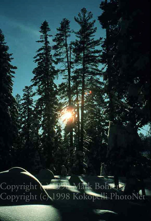 Snow and sunstar, Donner Lake area, California