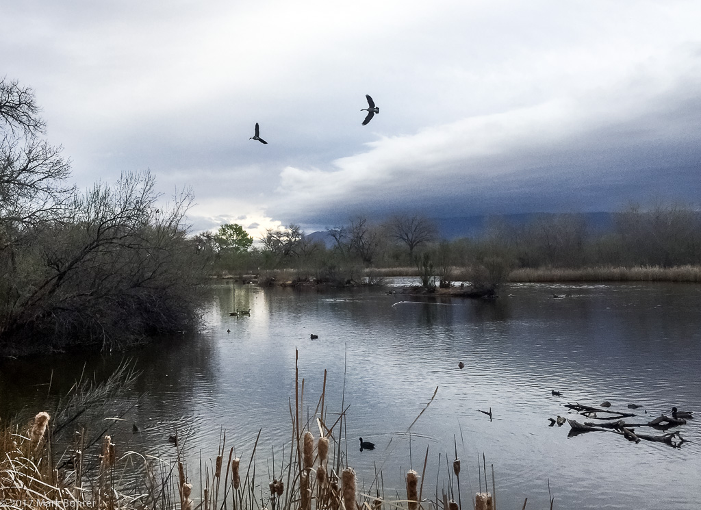 Early moring at the Rio Grande Nature Center, Albuquerque, New Mexico