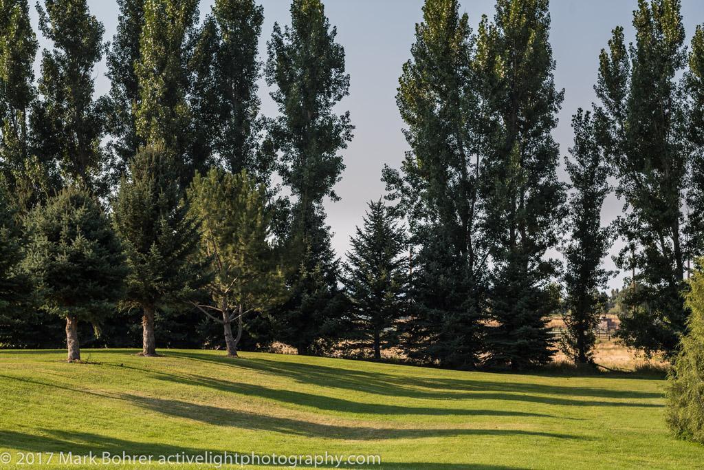 The meadow at North Bingham County Recreation Area, Shelley, Idaho