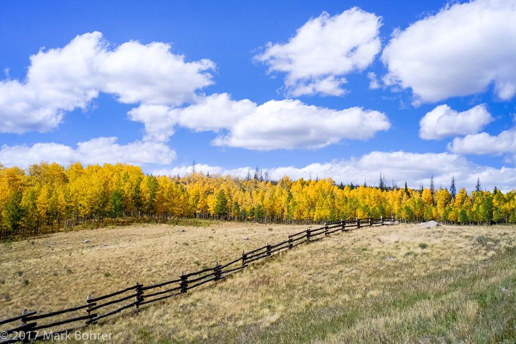 Aspen Color near Spring Creek Pass, Colorado Highway 149