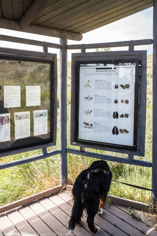 Daisy ignores the display, Fossil Butte gazebo