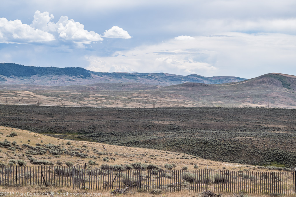 Pronghorn and landlines, Fossil Butte National Monument