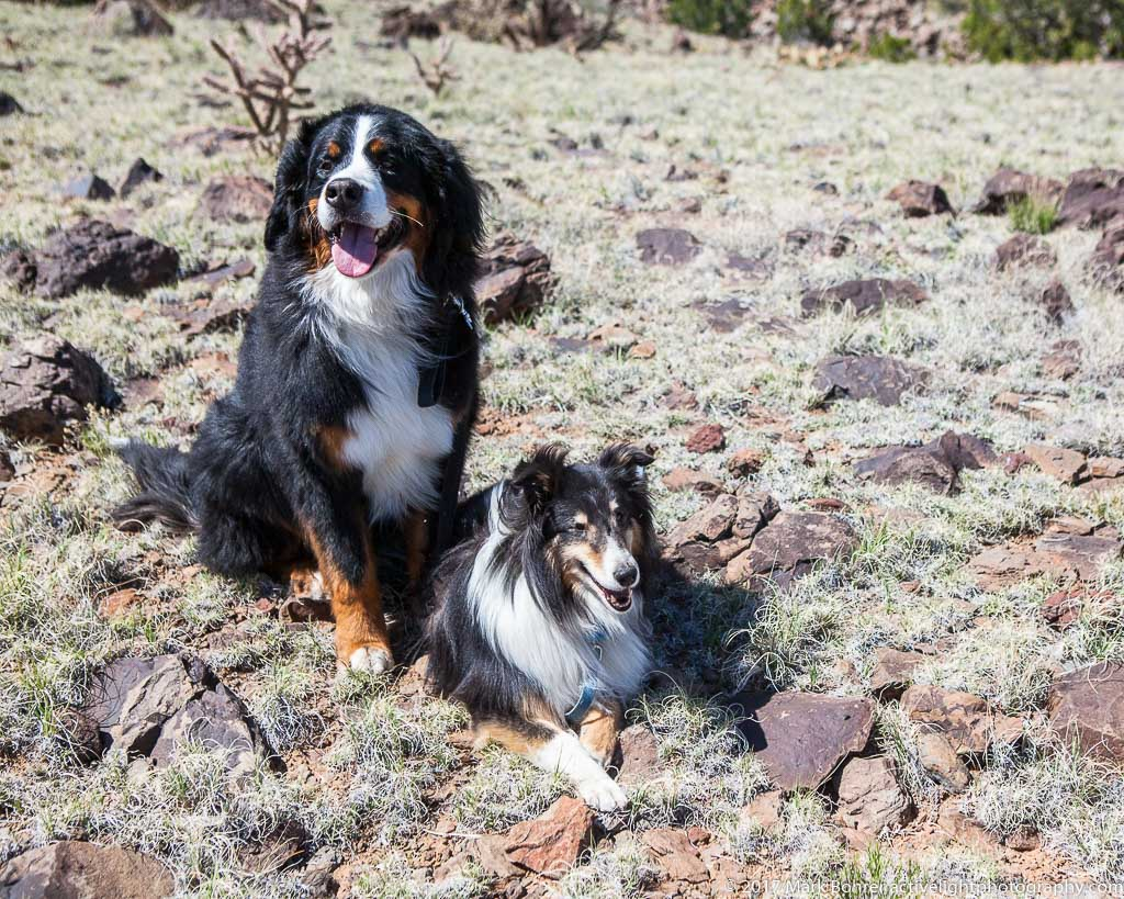 Daisy and Buzz take a break on Cabezon Peak, April 2017