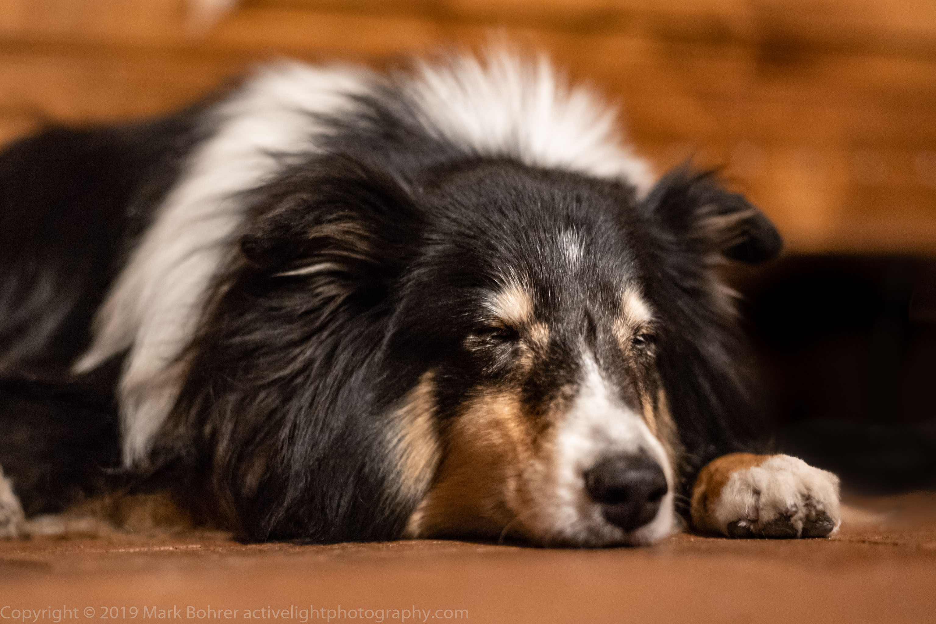 Buzz snoozing - with 50mm f/2 Summitar from 1949