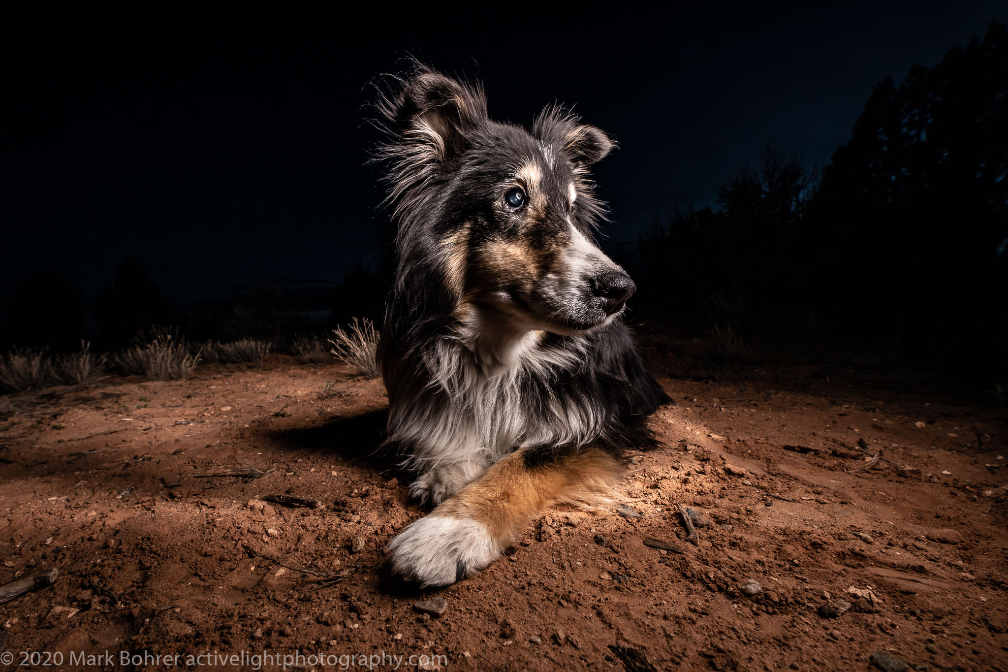 Sheltie Buzz At Hovenweep National Monument, April 2019 - Elinchrom ELB400 HS