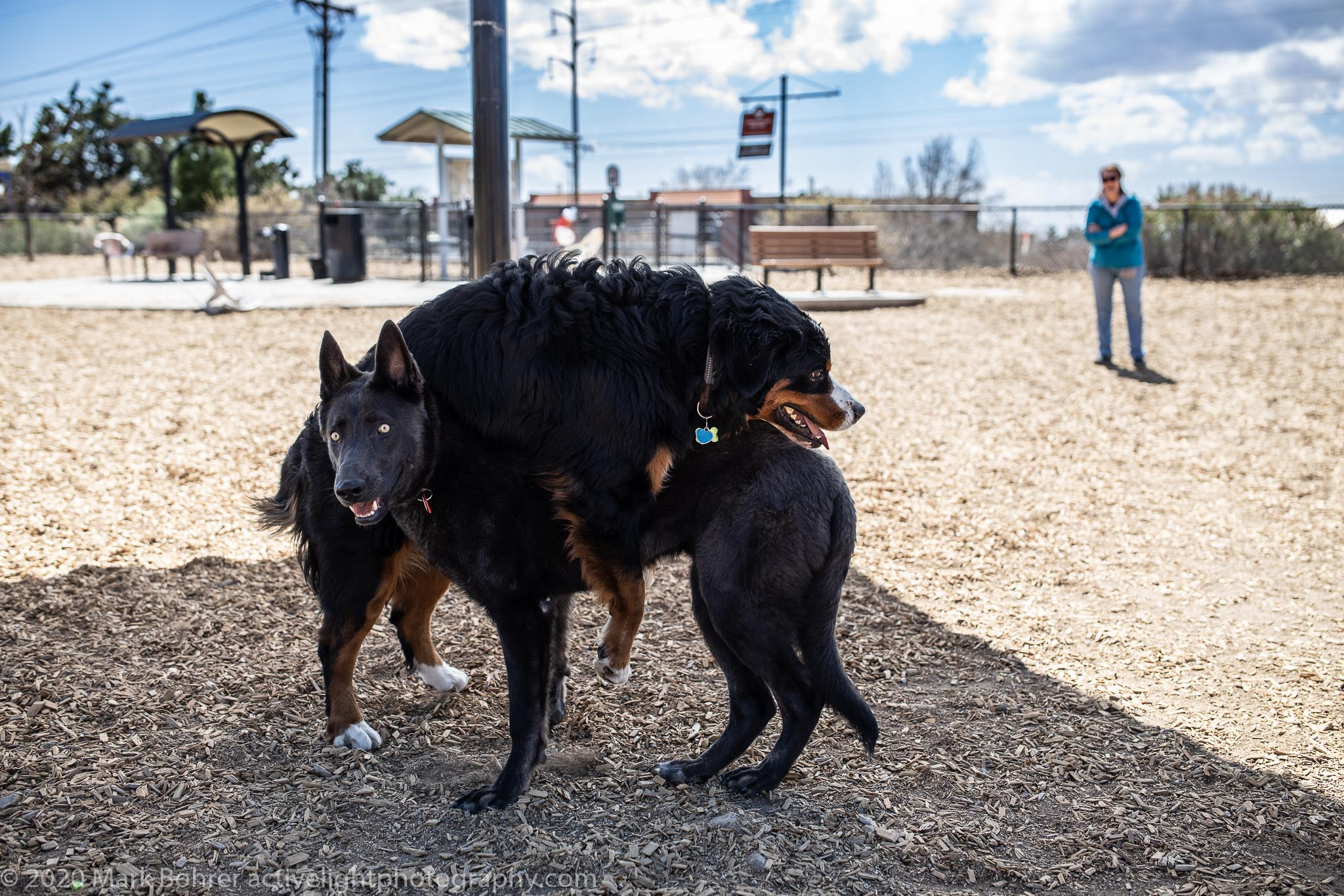 Social distancing at the dog park